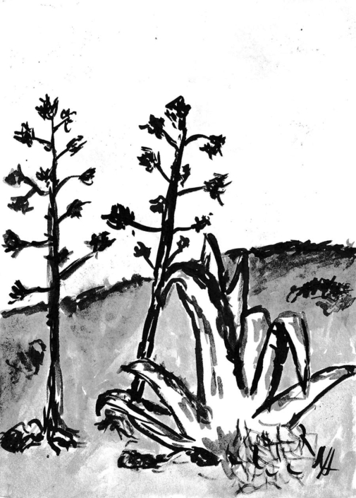 Indian ink painting - agave