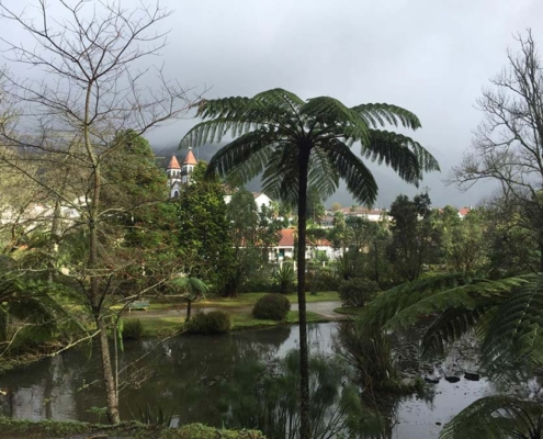 Azores lake and palm tree