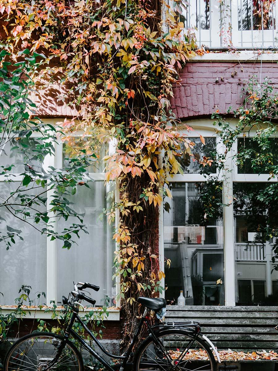 bike, house, leaves - autumn in Amsterdam
