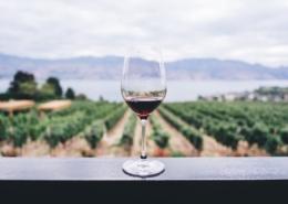 virtual wine tours