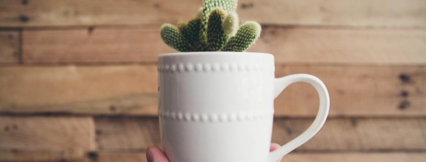 cactus in a mug - Alix M. Campbell